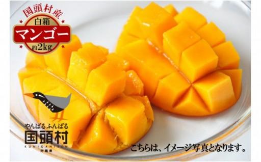 国頭村産マンゴー 白箱 (3玉~6玉・約2kg)