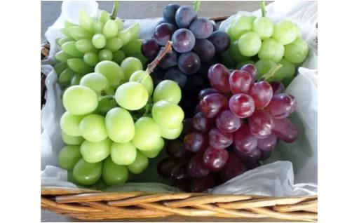 大好評!深谷果樹園のあま~いブドウ受付開始です!