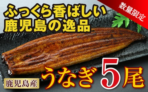 【数量限定!】鹿児島産特上うなぎの蒲焼 5尾