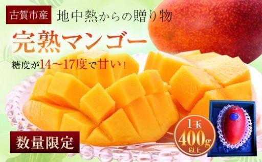 完熟マンゴー ( 1玉400g以上)