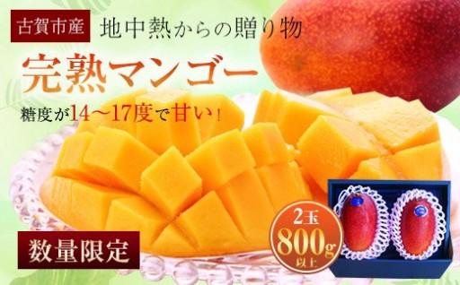 完熟マンゴー( 2玉800g以上)