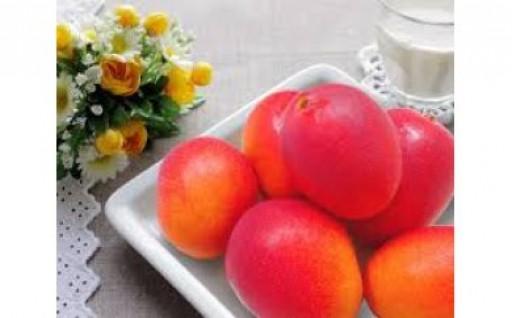 鹿児島県産完熟マンゴー<明宝>大小入って2kg