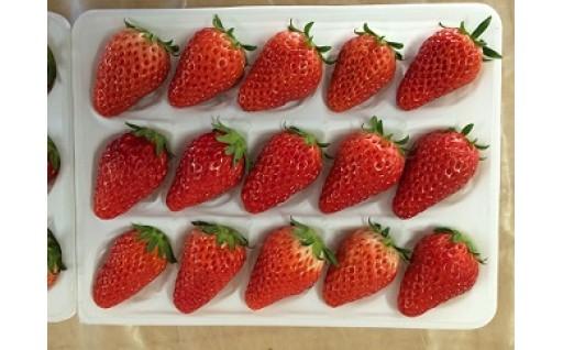 【季節限定】イチゴ(あきひめ)