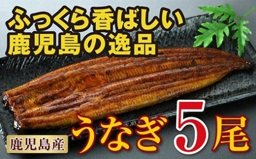 夏バテ防止に!鹿児島産特上うなぎ5尾!