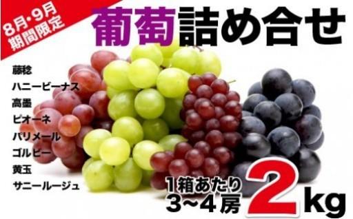 8月9月限定! 新鮮な葡萄が楽しめるセットです!