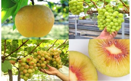 東村山は知る人ぞ知るフルーツの産地!