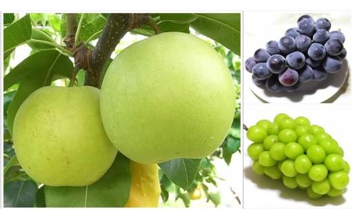 鳥取県南部町から人気のフルーツをお届けします!