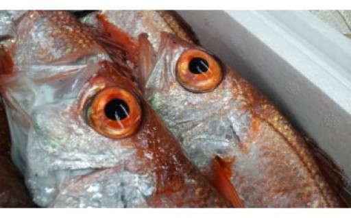 期間限定!鮮魚「のどぐろ」