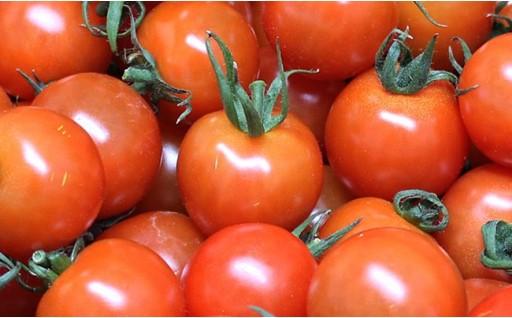 平均糖度8度以上!安心安全!完熟プチトマト3kg