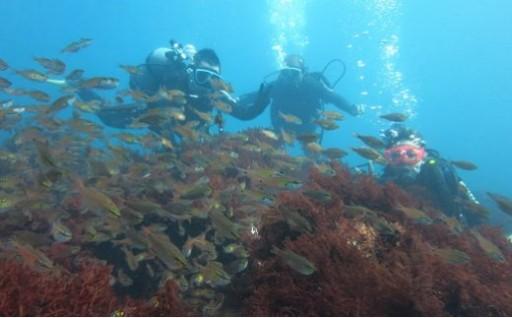 ダイビングの穴場! 通好みの館山の海を満喫