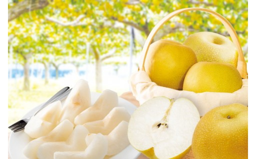 【佐賀県伊万里市】毎年人気!新高梨の受付中です!