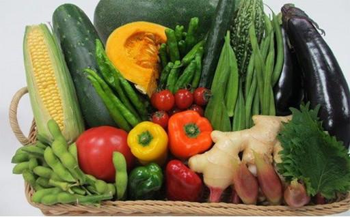 新鮮な野菜詰め合わせ申し込み受付開始しました!!