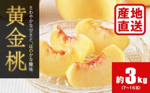 H235 【数量限定・秀品】黄金桃 約3kg