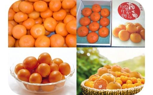 【伊万里市】各種フルーツの先行受付開始しました!