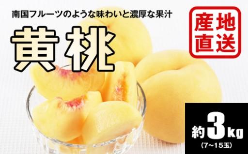 H236 【秀品】黄桃 約3kg