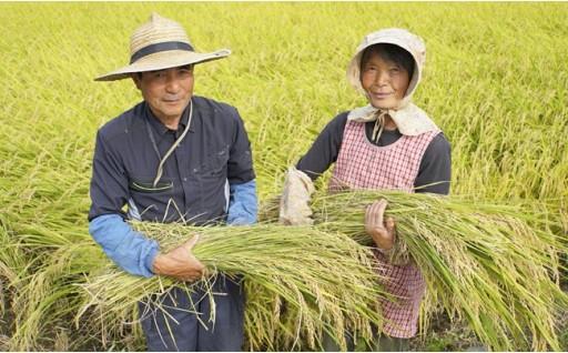 農家さん直送!千葉の新米コシヒカリ8kg精米
