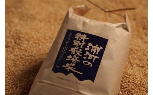 新米受付開始!「浦河の特別栽培米(ななつぼし)」