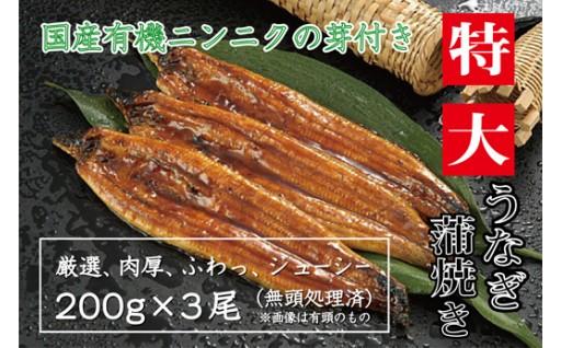 特大うなぎ蒲焼き3尾と国産有機ニンニクの芽セット