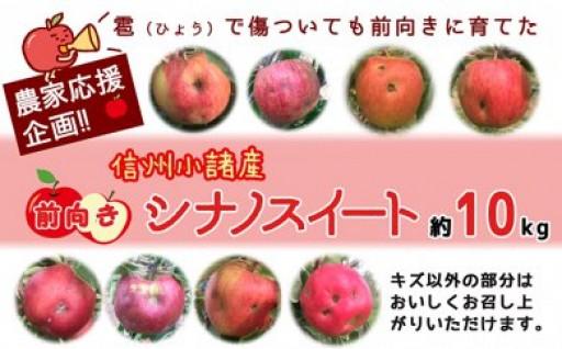 【農家応援企画!】雹害リンゴをとってもお得に!