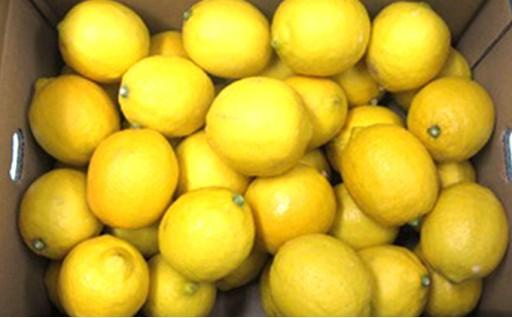 品質にこだわった国産レモン