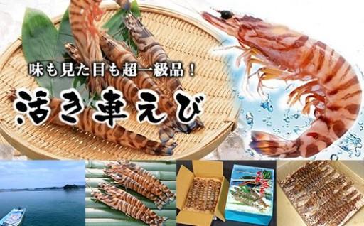産地直送!活き車えび たっぷり1kg!!