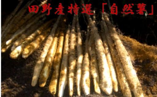 田野産特選「自然薯」※先行受付開始中!