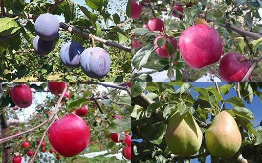 10月発送の果物の申込期限が迫っています!