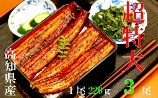 超特大!高知県産うなぎ蒲焼き6~7人前3尾セット