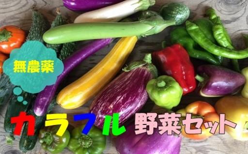 カラフルな無農薬野菜が届く!!