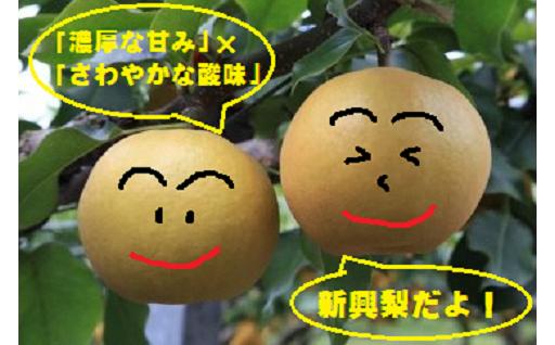 果汁たっぷり!秋の味覚『新興梨』