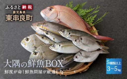 鮮度が命!鮮魚問屋が厳選した『大隅の鮮魚BOX』