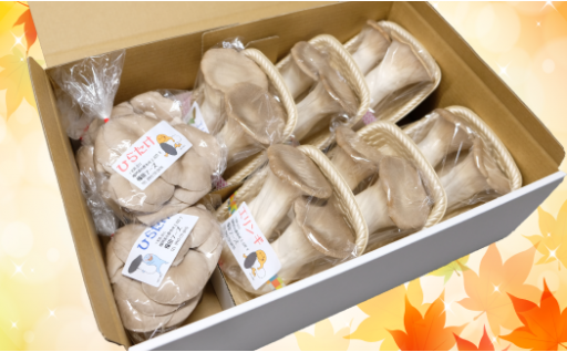 【無農薬栽培】ビッグエリンギ と平茸ギフトセット