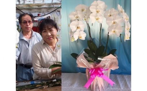 【胡蝶蘭】最高級花の3本立ち20~22輪前後