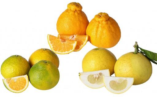 数量限定 くまもとの柑橘 定期便