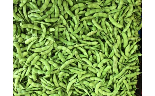 受付残り3日。大好評「特別栽培 枝豆」。