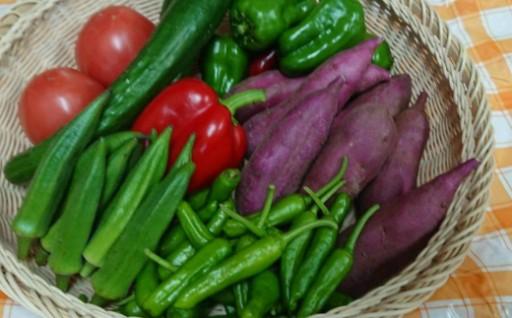 室戸市の新鮮野菜7種セット(おまけ付き)です。