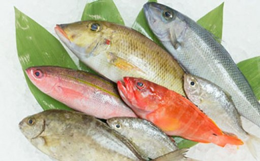 魚屋さん一押し!おまかせ鮮魚セット(約2kg)