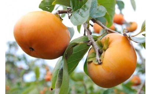 特選次郎柿