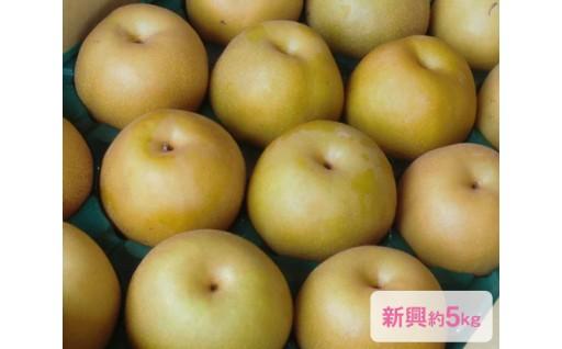 終了間近10月20日まで!日本梨「新興」約5kg