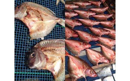 【自家製】季節の高級地魚を詰め合わせました!