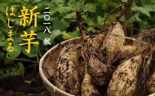 1年に1度の芋の旬。新芋の季節です。