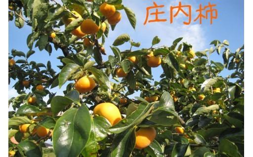 まもなく旬を迎える「庄内柿」