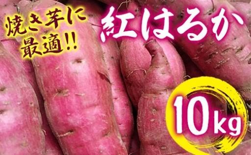 【大好評につき復活!】千葉県産紅はるか約10kg