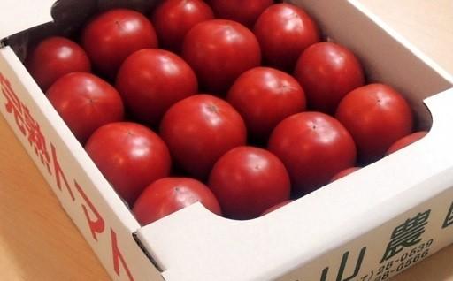 美味しんぼ紹介されたトマト♪31年1月中旬発送