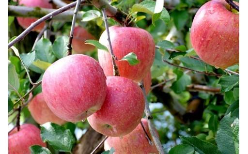 【10月31日まで】完熟ラ・フランスとりんご