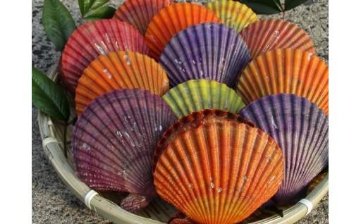 長島特産ヒオウギ貝