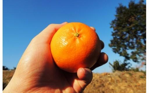 希少!オレンジとみかんのいいとこどり「はれひめ」
