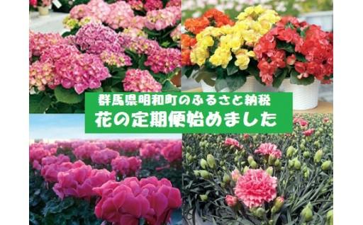 有名百貨店でも飾られる明和の花で心豊かな生活を🌼