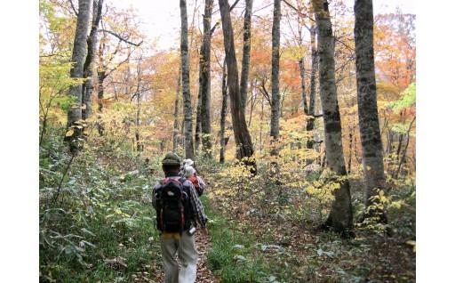 締切迫る!秋の紅葉散策&きのこ収穫体験