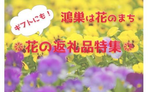 【鴻巣は花のまち】花の返礼品特集!